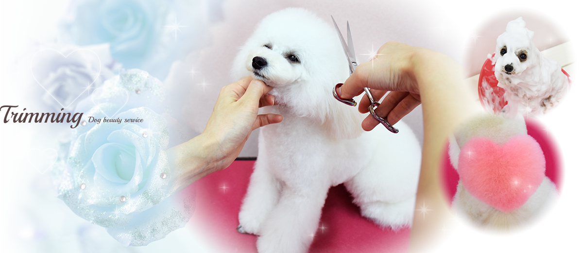 Trimming Dog beauty service