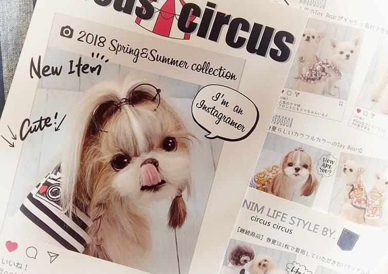 【Decoco 】circus cirucus ご予約受付中!!のアイキャッチ