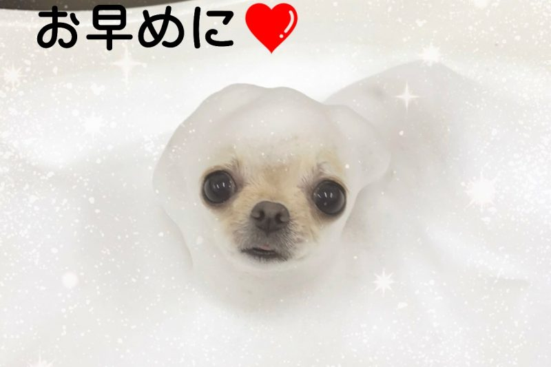 ⭐︎Decoco神戸店 営業日のご案内⭐︎のアイキャッチ