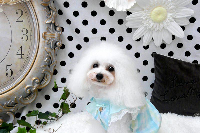 【Decoco】Glamourism  Sally 入荷のアイキャッチ