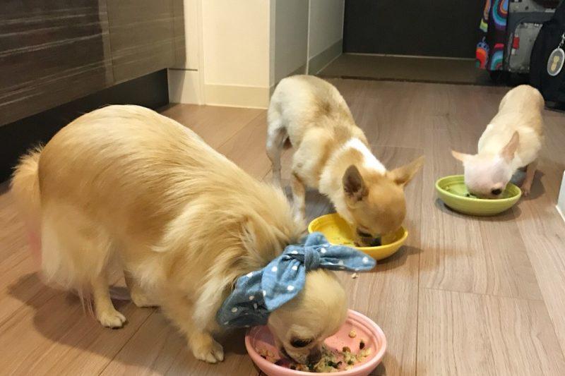 【Decoco】入荷しましたダチョウ肉と野菜の犬ごはんのアイキャッチ