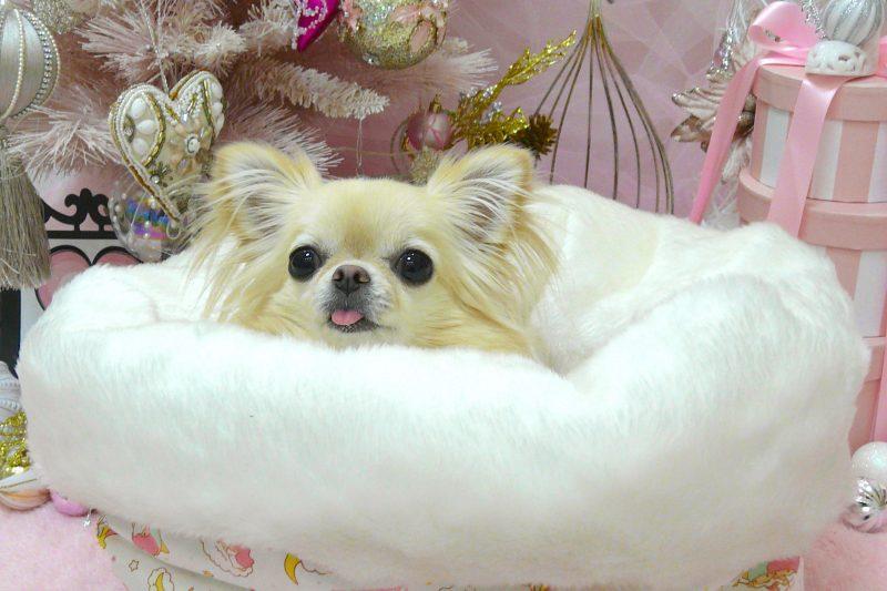 """【Decoco】お買い得""""SALE  """"Otty 3Way ベッドマットのアイキャッチ"""