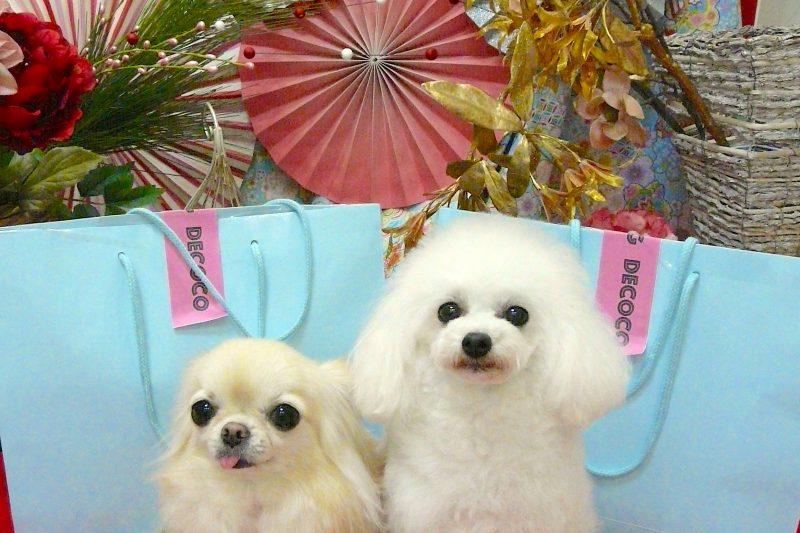 【Decoco】 お買い得 HAPPY BAG ★SALE ★のアイキャッチ